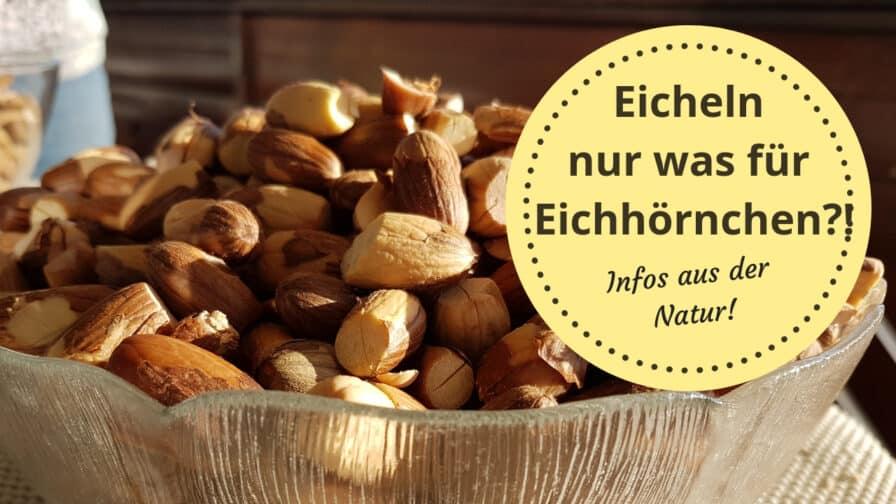 Eicheln