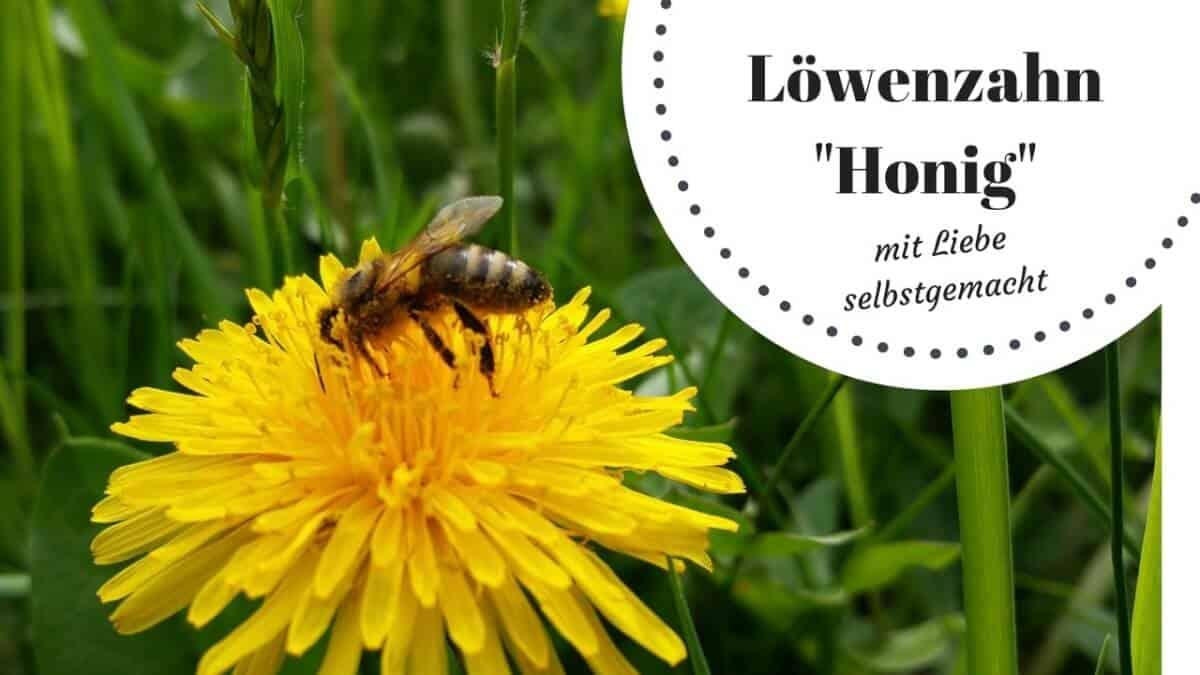 Löwenzahnhonig (c) Heike Engel