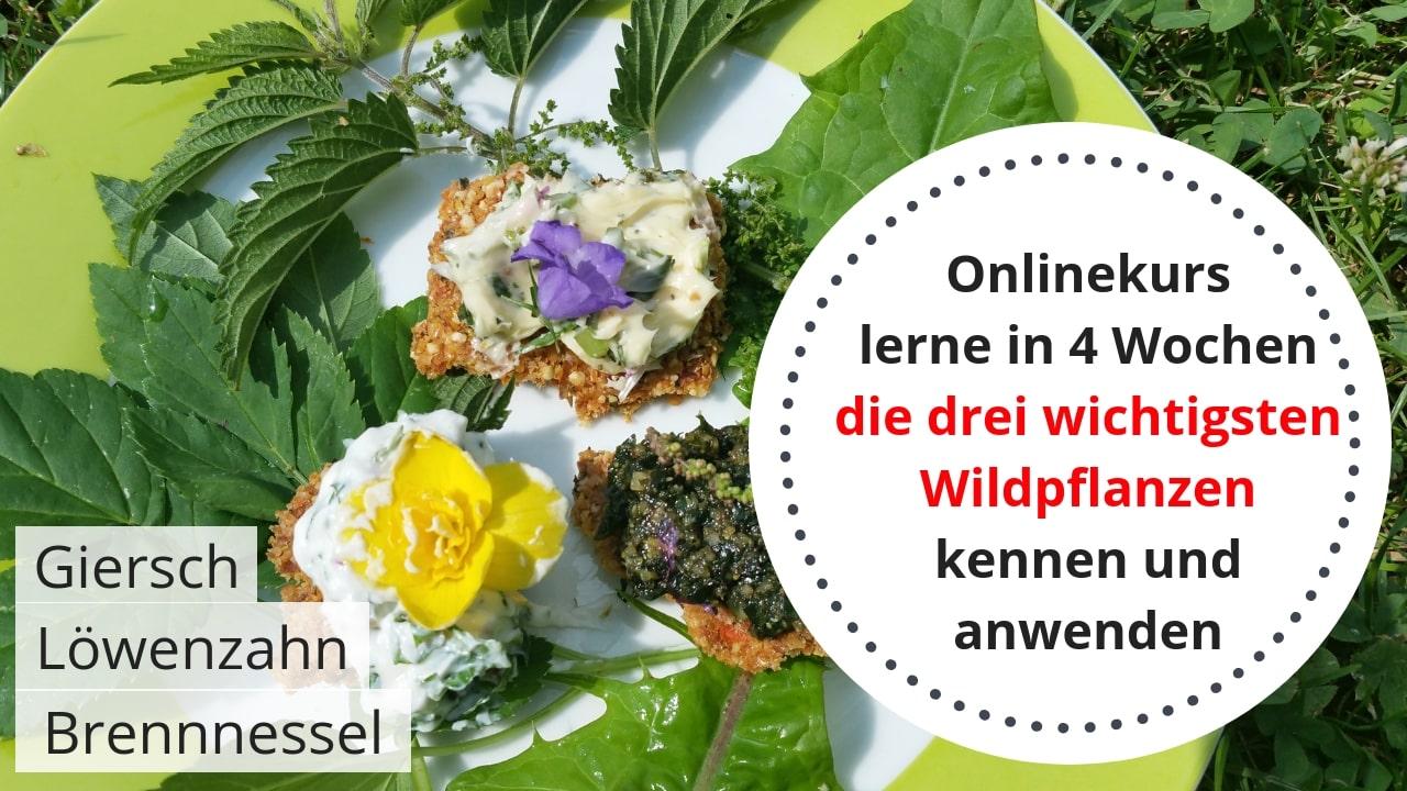 Online-Kurs die 3 wichtigsten Wildpflanzen